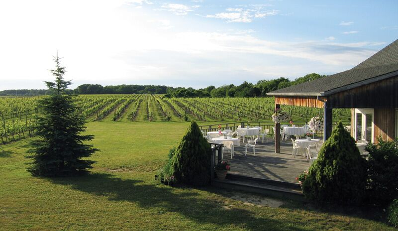 What Vineyards Are Open Today On Long Island