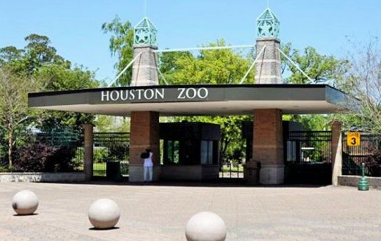 Ride METRORail to the Houston Zoo from the Fannin South Park and Ride lot. With frequent service, METRORail is a convenient answer to traffic congestion in the Texas Medical Center/Hermann Park/Museum District corridor.
