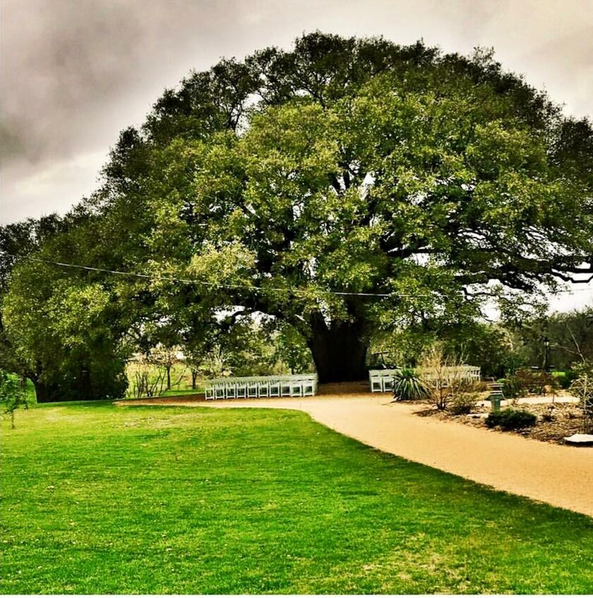 Waxahachie Wedding Venues: Chasity Gates And Carson Roye's Wedding Website