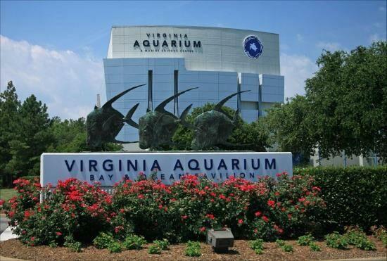 Virginia aquarium discount coupon