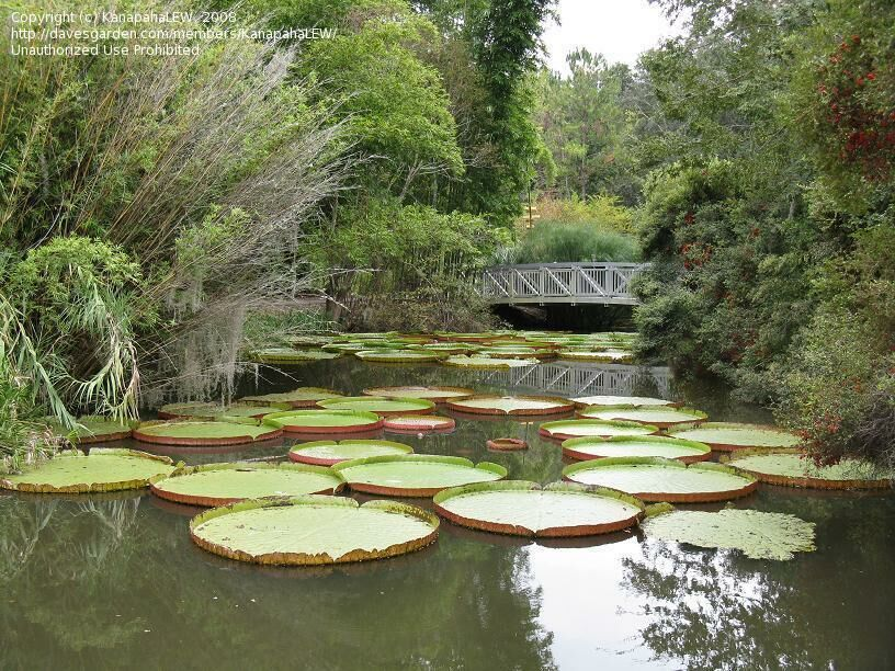 Gainesville Botanical Garden Nrys Info
