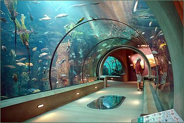 Aquarium Way Long Beach Ca Best Accent Chairs And